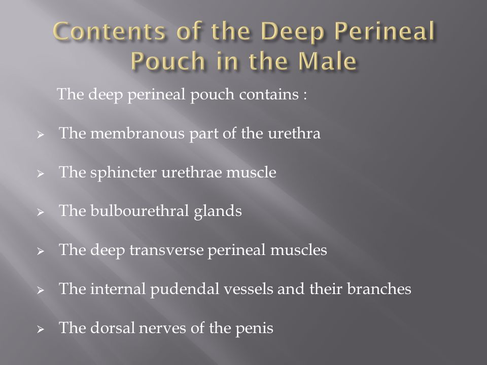 The deep perineal pouch contains :  The membranous part of the urethra  The sphincter urethrae muscle  The bulbourethral glands  The deep transverse perineal muscles  The internal pudendal vessels and their branches  The dorsal nerves of the penis