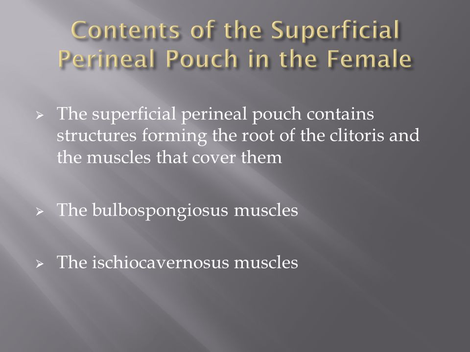  The superficial perineal pouch contains structures forming the root of the clitoris and the muscles that cover them  The bulbospongiosus muscles  The ischiocavernosus muscles