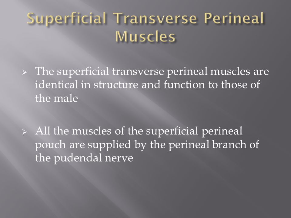  The superficial transverse perineal muscles are identical in structure and function to those of the male  All the muscles of the superficial perineal pouch are supplied by the perineal branch of the pudendal nerve