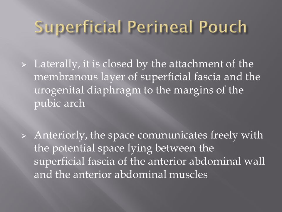  Laterally, it is closed by the attachment of the membranous layer of superficial fascia and the urogenital diaphragm to the margins of the pubic arch  Anteriorly, the space communicates freely with the potential space lying between the superficial fascia of the anterior abdominal wall and the anterior abdominal muscles