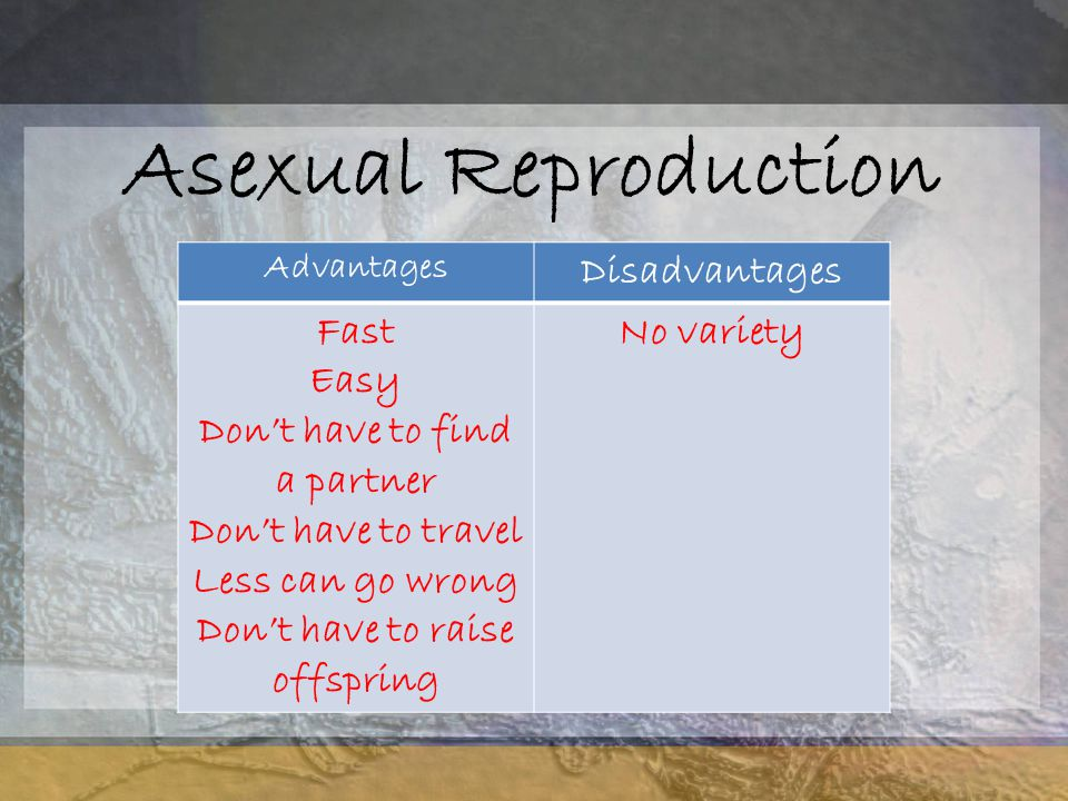 Asexual Reproduction Advantages Disadvantages Fast Easy Don't have to find a partner Don't have to travel Less can go wrong Don't have to raise offspring No variety
