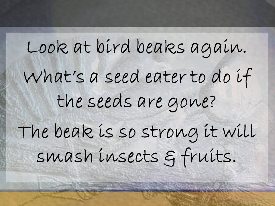 Look at bird beaks again.What's a seed eater to do if the seeds are gone.