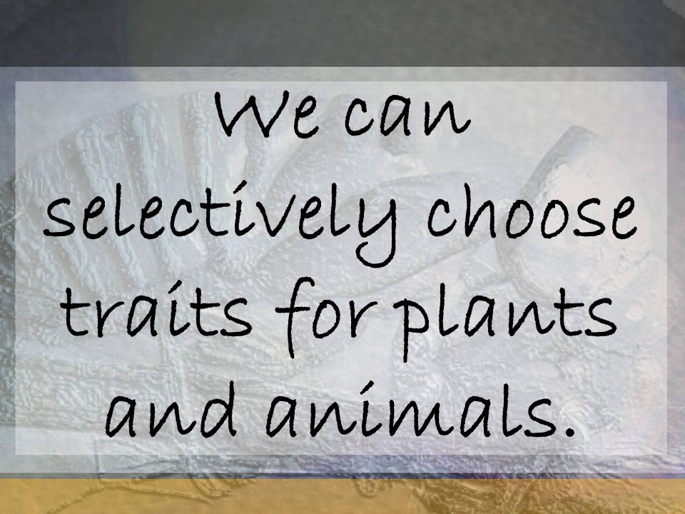 We can selectively choose traits for plants and animals.