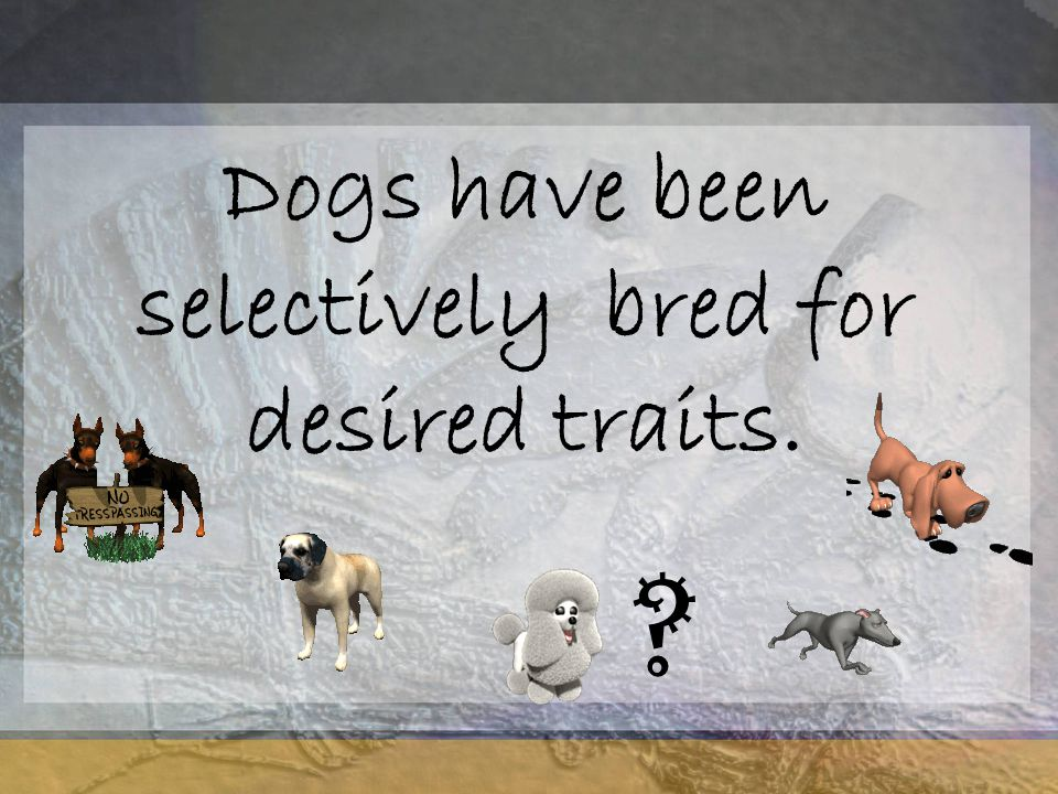 Dogs have been selectively bred for desired traits. ?