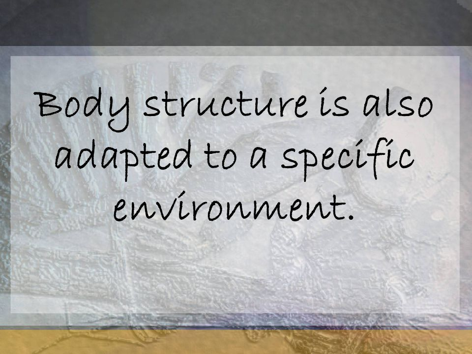 Body structure is also adapted to a specific environment.