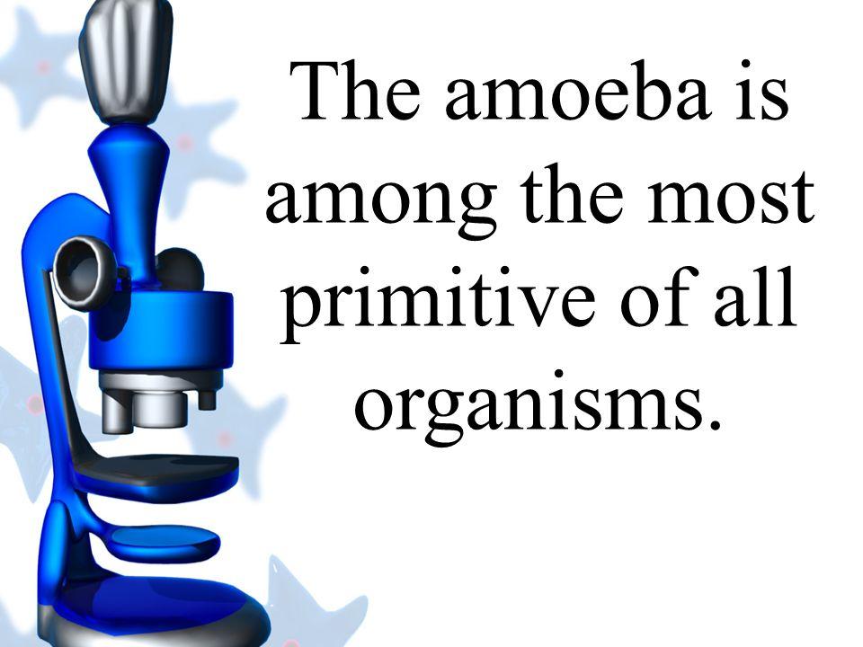 The Amoeba