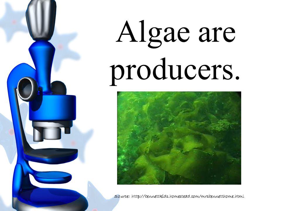 Algae can be microscopic to 150 feet long. Source: Scribemedia.orgc