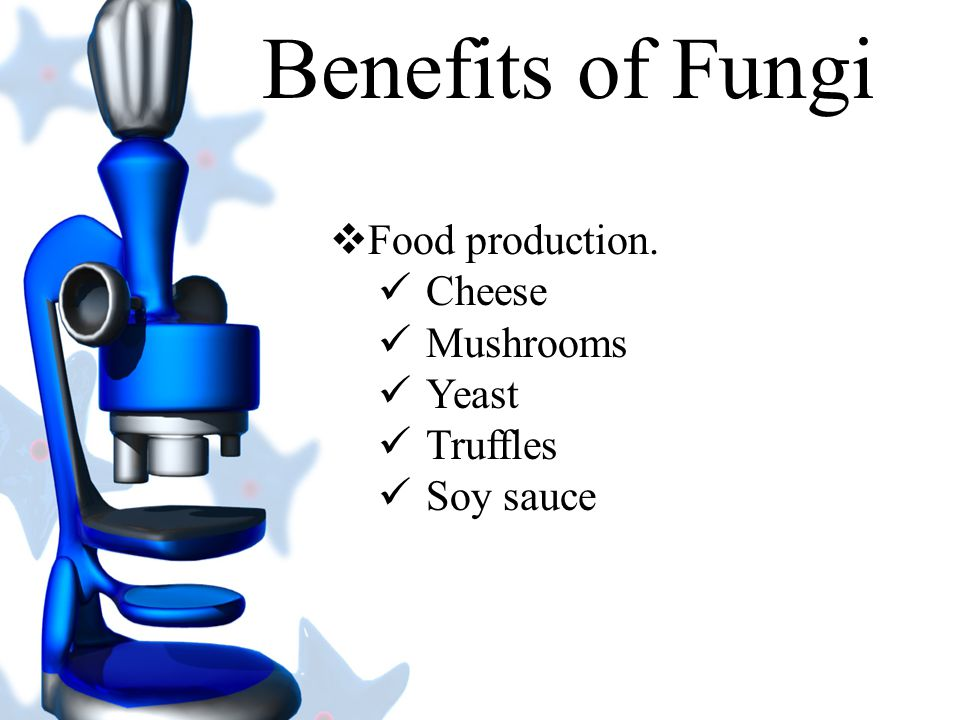Benefits of Fungi  Used to make chemicals used in manufacturing.