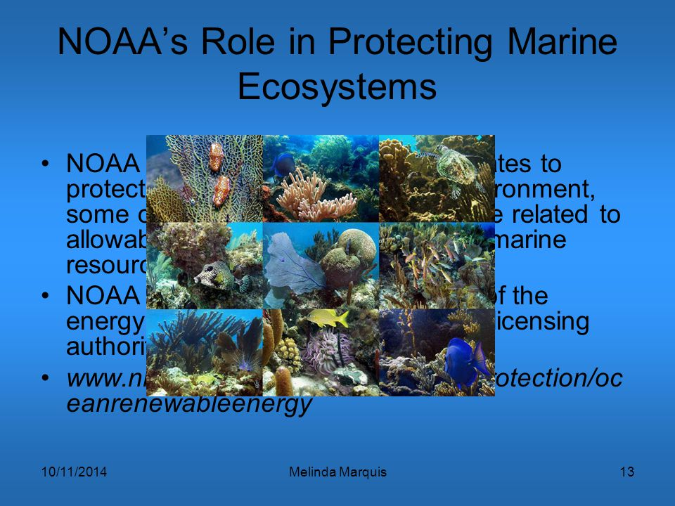 10/11/2014Melinda Marquis13 NOAA's Role in Protecting Marine Ecosystems NOAA has multiple legislative mandates to protect marine species and their env