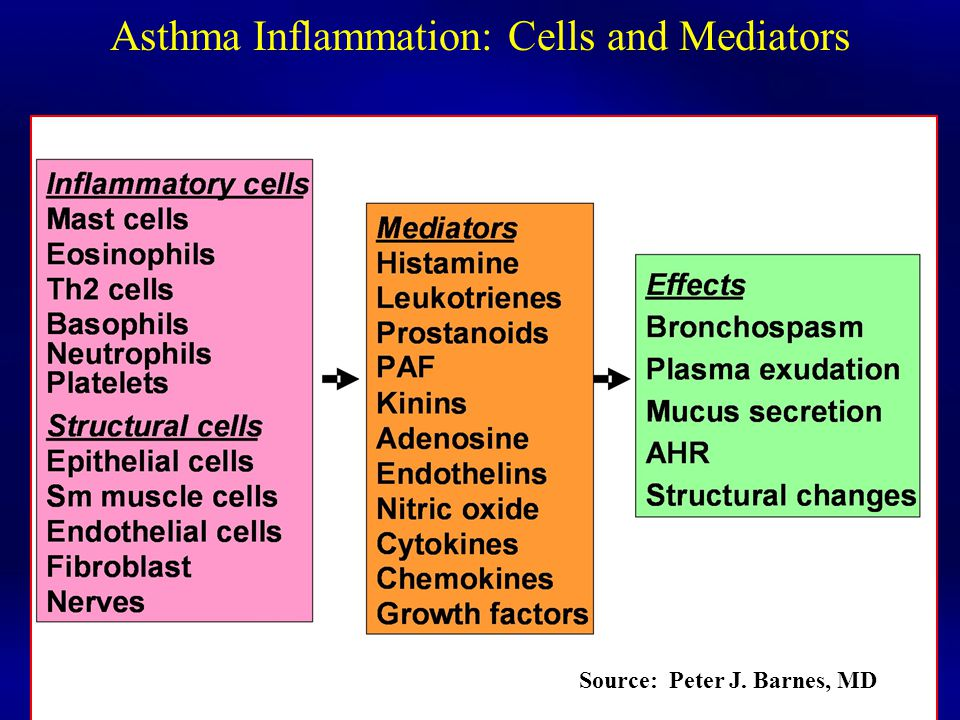 Asthma Inflammation: Cells and Mediators Source: Peter J. Barnes, MD