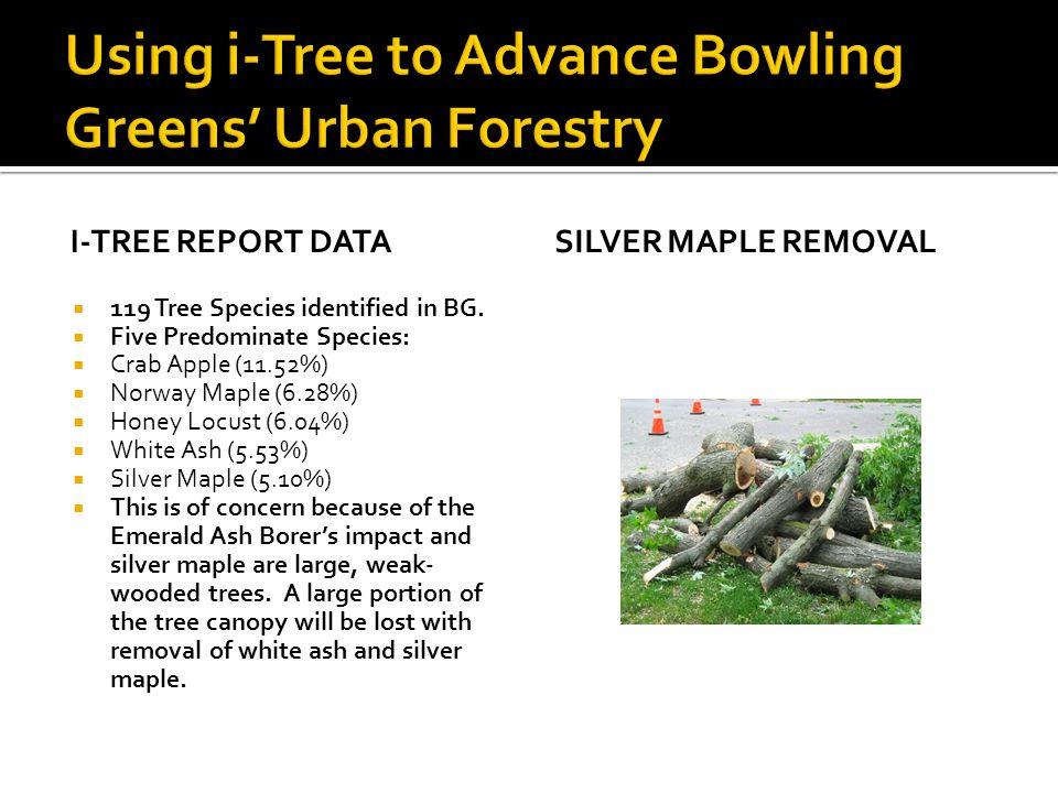 I-TREE REPORT DATA  119 Tree Species identified in BG.  Five Predominate Species:  Crab Apple (11.52%)  Norway Maple (6.28%)  Honey Locust (6.04%