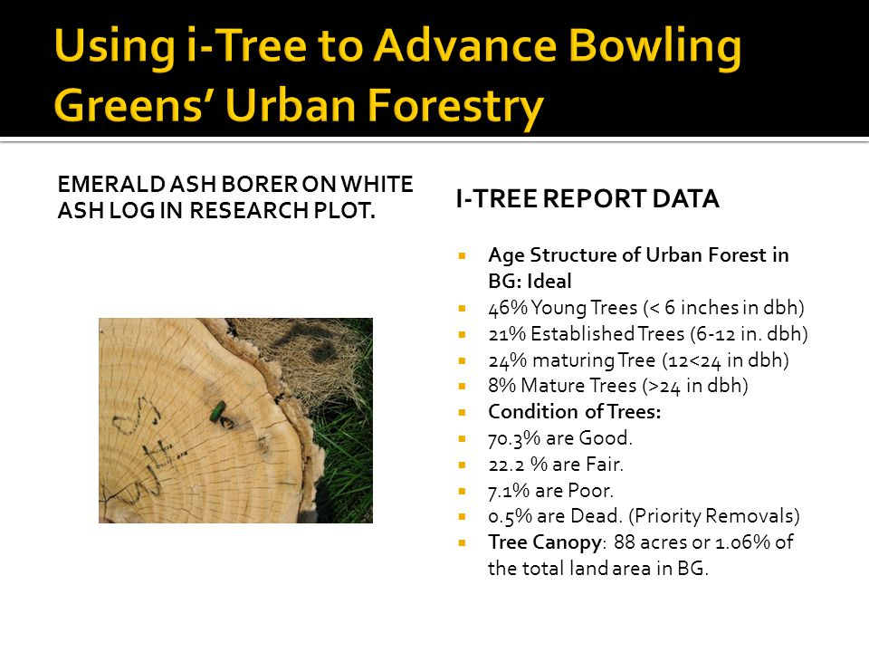 EMERALD ASH BORER ON WHITE ASH LOG IN RESEARCH PLOT. I-TREE REPORT DATA  Age Structure of Urban Forest in BG: Ideal  46% Young Trees (< 6 inches in
