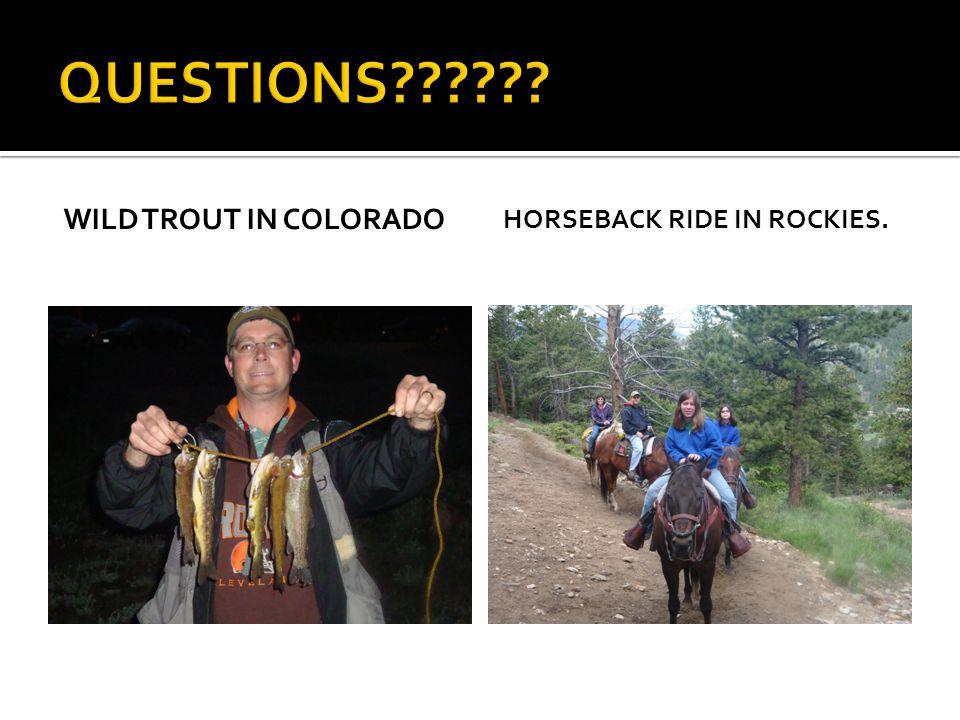 WILD TROUT IN COLORADO HORSEBACK RIDE IN ROCKIES.