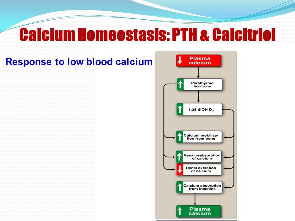 Calcium Homeostasis: PTH & Calcitriol Response to low blood calcium
