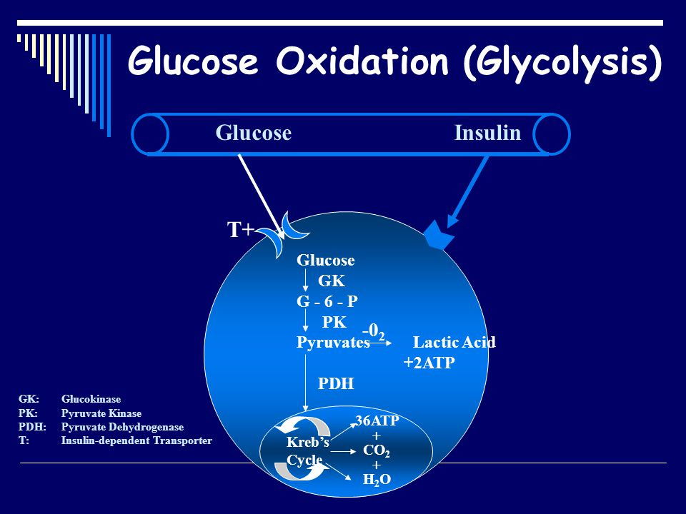 Insulin: Glucose utilisation  Oxidation  Storage Liver & Muscles glycogen Adipocytes lipids