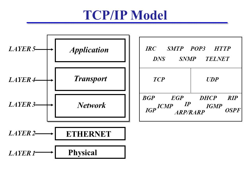 TCP/IP Model Application Transport ETHERNET Physical LAYER 1 LAYER 2 LAYER 3 LAYER 4 LAYER 5 Network IRC DNS SMTP SNMP POP3 TELNET HTTP ARP/RARP IP ICMP DHCP IGMP RIP TCPUDP OSPFIGP EGPBGP