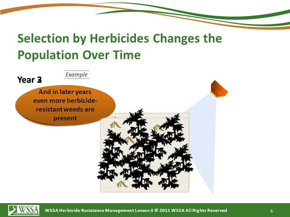 WSSA Herbicide Resistance Management Lesson 3 © 2011 WSSA All Rights Reserved 6 Year 2 The process repeats… Year 3 …Until Year 3 has significant weed resistance… And in later years even more herbicide- resistant weeds are present And in later years even more herbicide- resistant weeds are present Example Selection by Herbicides Changes the Population Over Time
