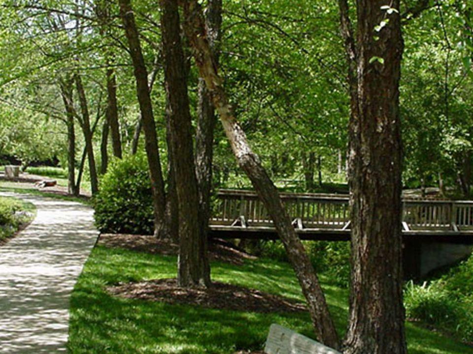 Betula Nigra Common Name: River Birch Family: Betulaceae Native: Eastern USA