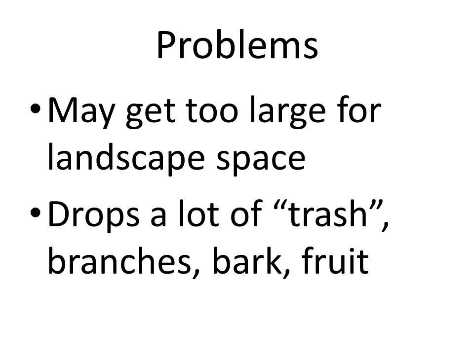 Cultural Practices Likes moist soils