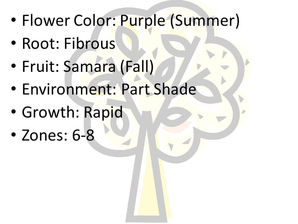 Flower Color: Purple (Summer) Root: Fibrous Fruit: Samara (Fall) Environment: Part Shade Growth: Rapid Zones: 6-8