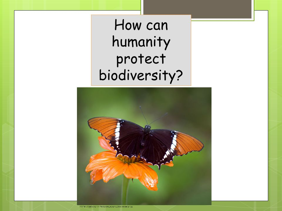 How can humanity protect biodiversity.