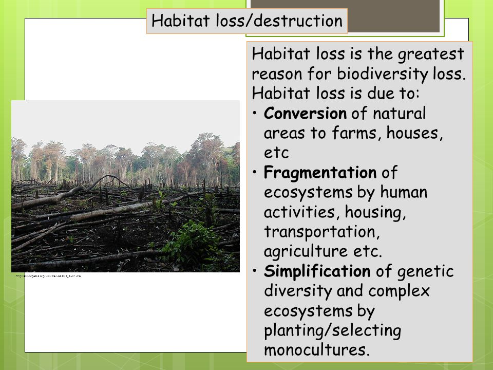 Habitat loss/destruction Habitat loss is the greatest reason for biodiversity loss.