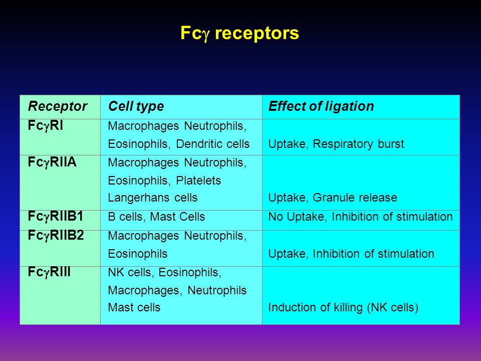 Fc  receptors ReceptorCell typeEffect of ligation Fc  RI Macrophages Neutrophils, Eosinophils, Dendritic cells Uptake, Respiratory burst Fc  RIIA Macrophages Neutrophils, Eosinophils, Platelets Langerhans cells Uptake, Granule release Fc  RIIB1 B cells, Mast CellsNo Uptake, Inhibition of stimulation Fc  RIIB2 Macrophages Neutrophils, Eosinophils Uptake, Inhibition of stimulation Fc  RIII NK cells, Eosinophils, Macrophages, Neutrophils Mast cellsInduction of killing (NK cells)