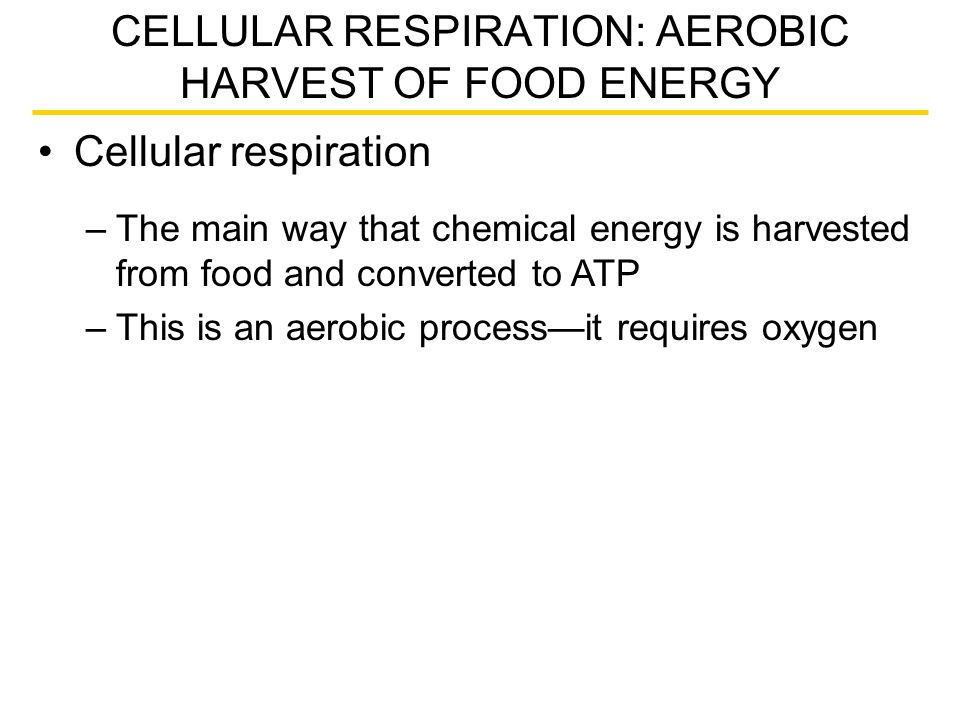 Cellular respiration CELLULAR RESPIRATION: AEROBIC HARVEST OF FOOD ENERGY –The main way that chemical energy is harvested from food and converted to A