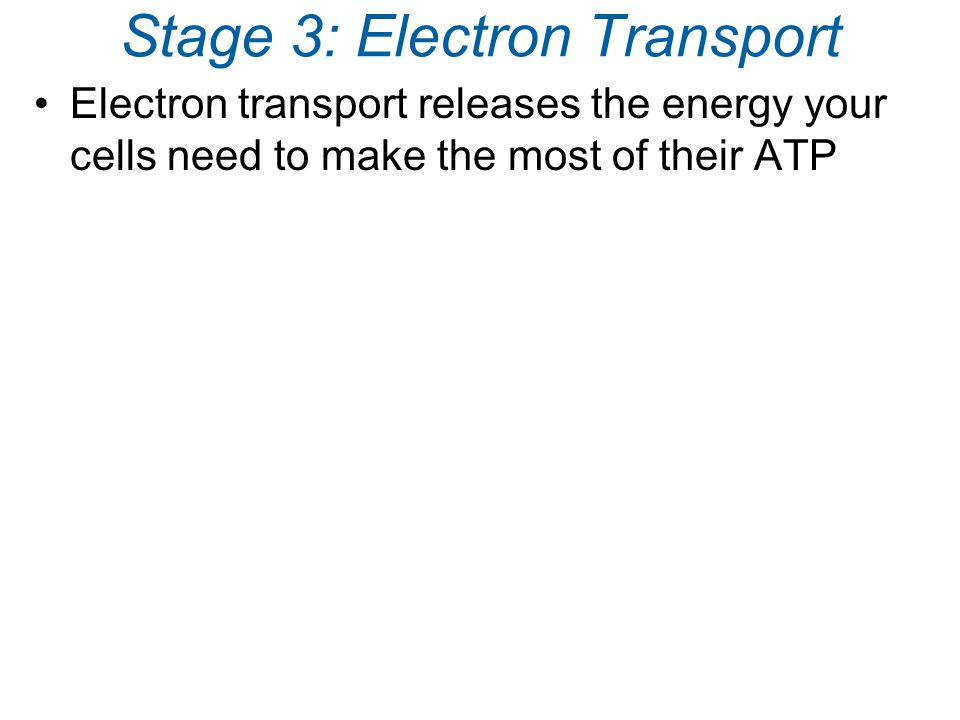 Stage 3: Electron Transport Electron transport releases the energy your cells need to make the most of their ATP