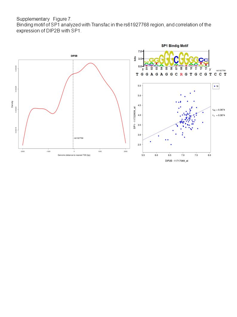 Supplementary Figure 7. Binding motif of SP1 analyzed with Transfac in the rs61927768 region, and correlation of the expression of DIP2B with SP1.