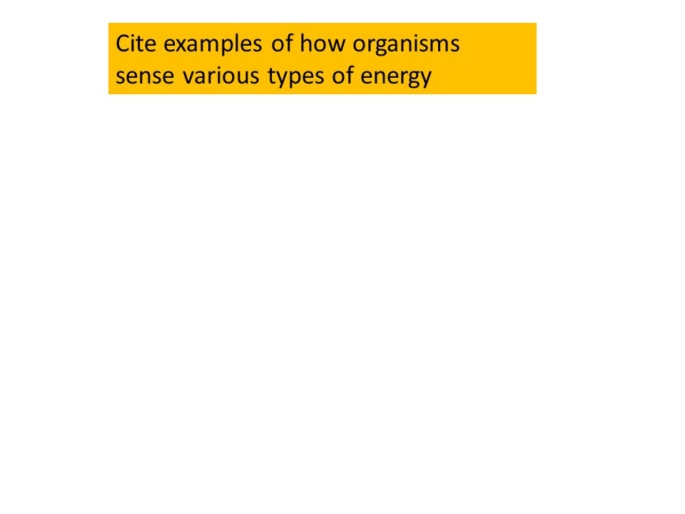 Cite examples of how organisms sense various types of energy