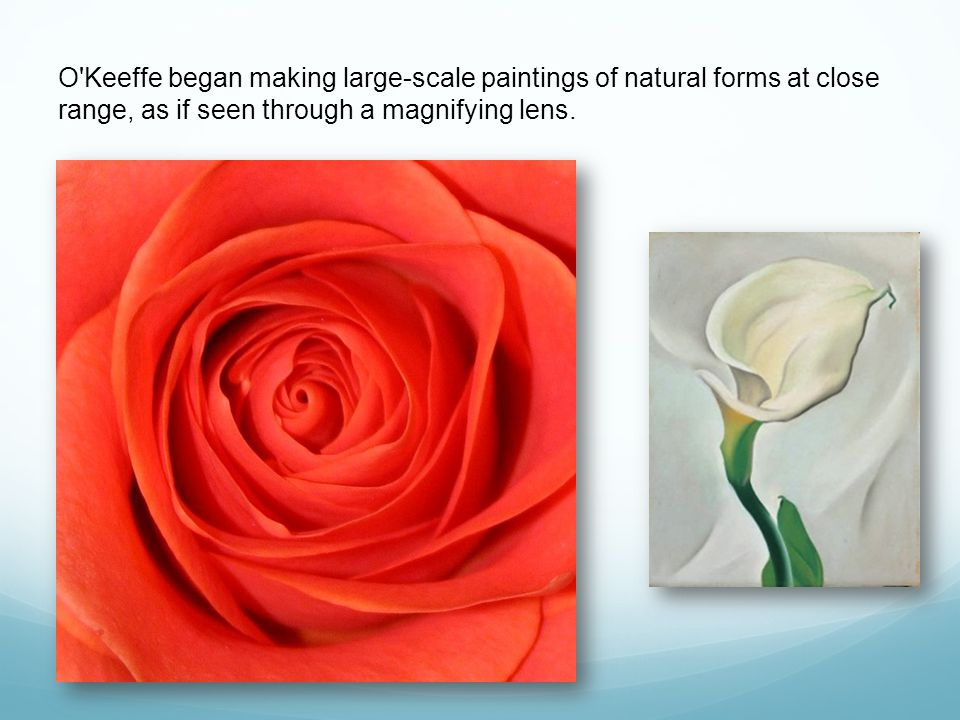 O Keeffe began making large-scale paintings of natural forms at close range, as if seen through a magnifying lens.