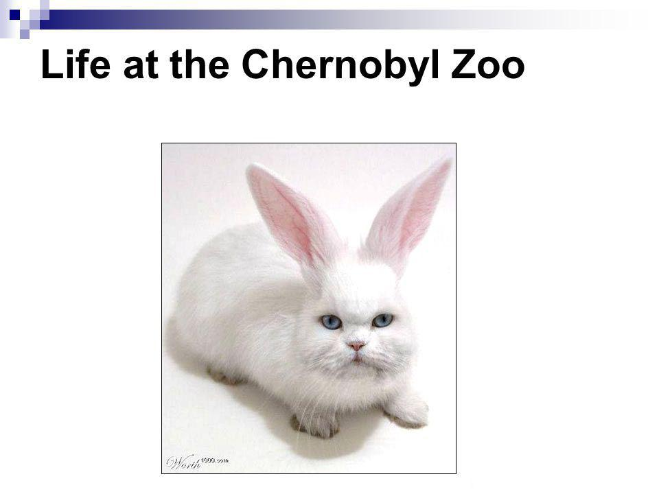 Life at the Chernobyl Zoo