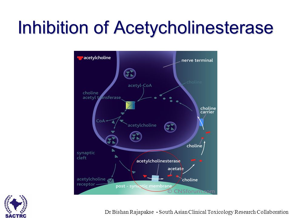 Dr Bishan Rajapakse - South Asian Clinical Toxicology Research Collaboration Inhibition of Acetycholinesterase