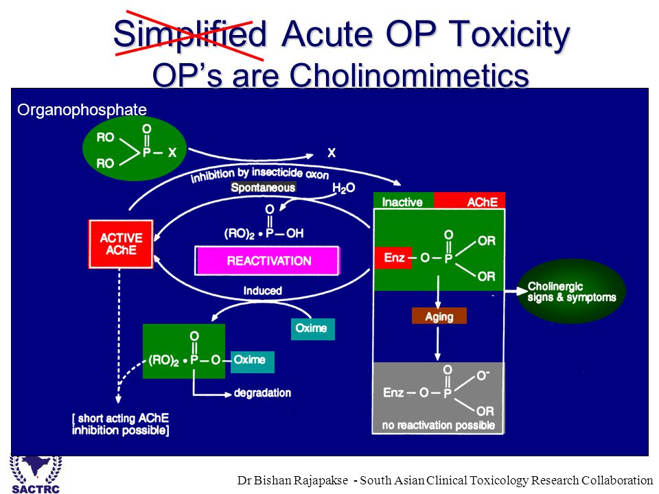 Dr Bishan Rajapakse - South Asian Clinical Toxicology Research Collaboration Simplified Acute OP Toxicity OP's are Cholinomimetics Organophosphate