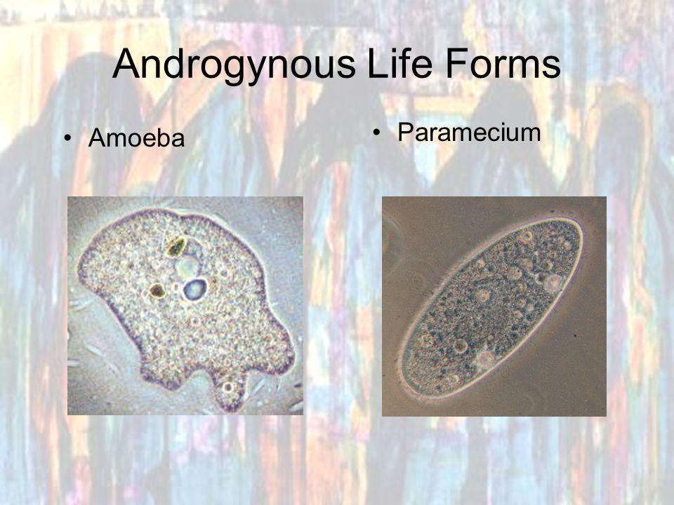 Androgynous Life Forms Amoeba Paramecium