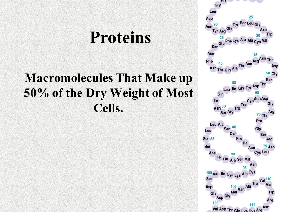 Proteins Macromolecules That Make up 50% of the Dry Weight of Most Cells.