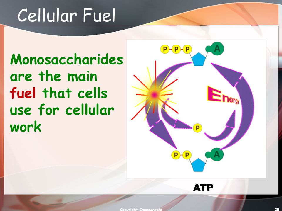 25 Cellular Fuel Monosaccharides are the main fuel that cells use for cellular work ATP Copyright Cmassengale
