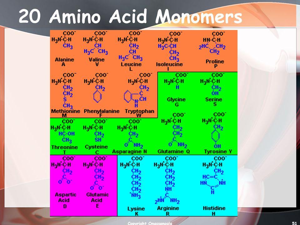 51 20 Amino Acid Monomers Copyright Cmassengale
