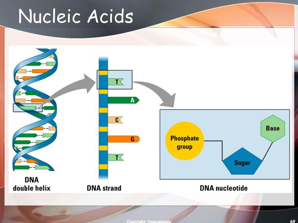 69 Nucleic Acids Copyright Cmassengale