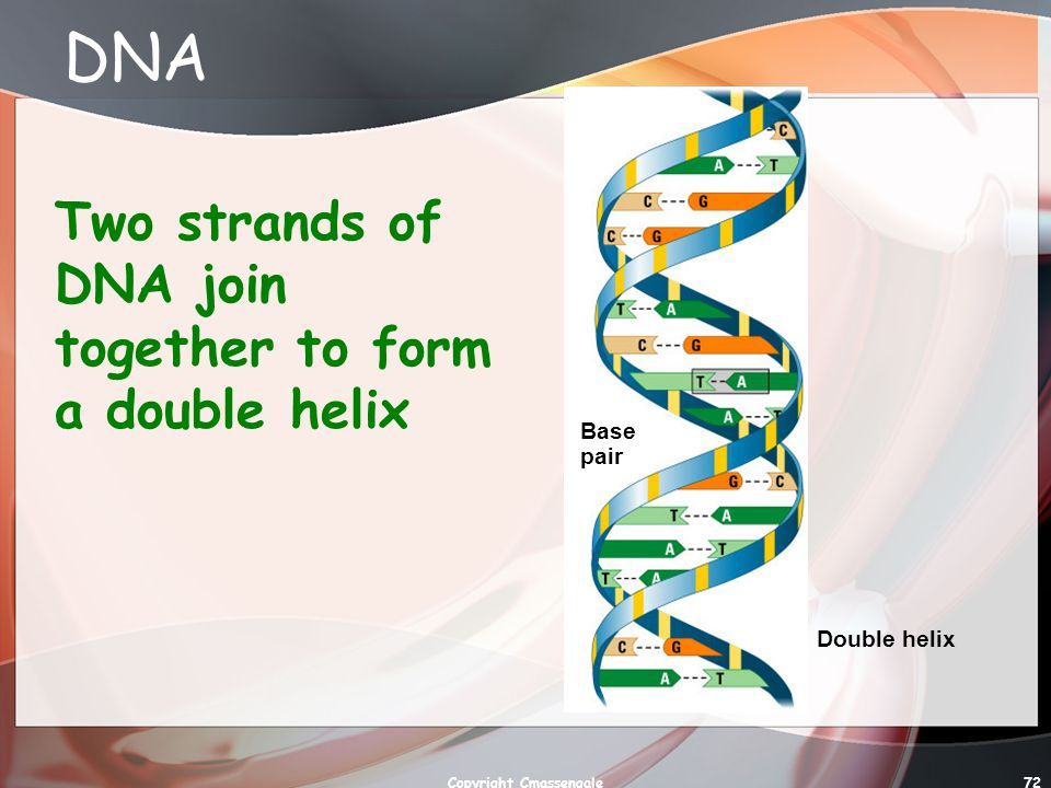 72 DNA Two strands of DNA join together to form a double helix Base pair Double helix Copyright Cmassengale