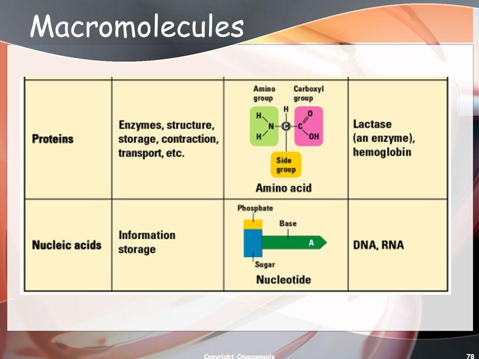78 Macromolecules Copyright Cmassengale