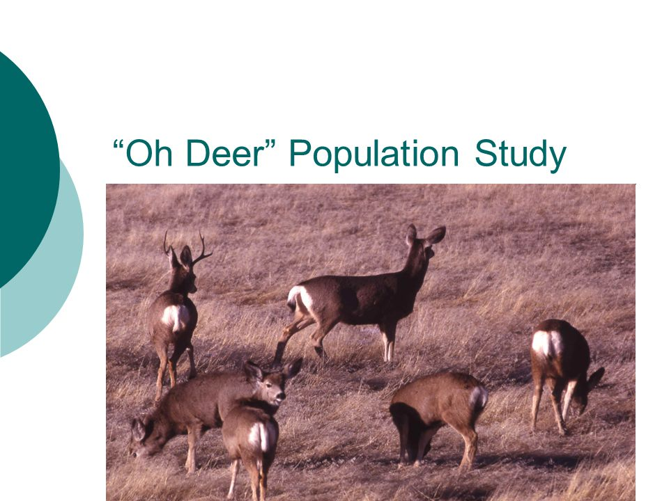 """Oh Deer"" Population Study"
