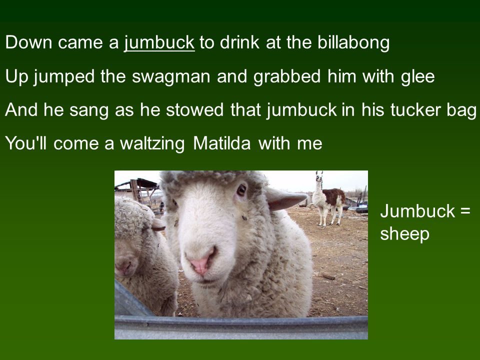 Down came a jumbuck to drink at the billabong Up jumped the swagman and grabbed him with glee And he sang as he stowed that jumbuck in his tucker bag You ll come a waltzing Matilda with me Jumbuck = sheep