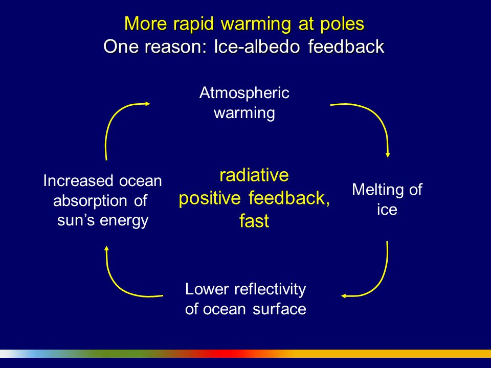 More rapid warming at poles One reason: Ice-albedo feedback Atmospheric warming Lower reflectivity of ocean surface Melting of ice Increased ocean absorption of sun's energy radiative positive feedback, fast