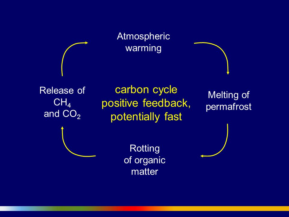 Atmospheric warming Rotting of organic matter Melting of permafrost Release of CH 4 and CO 2 carbon cycle positive feedback, potentially fast