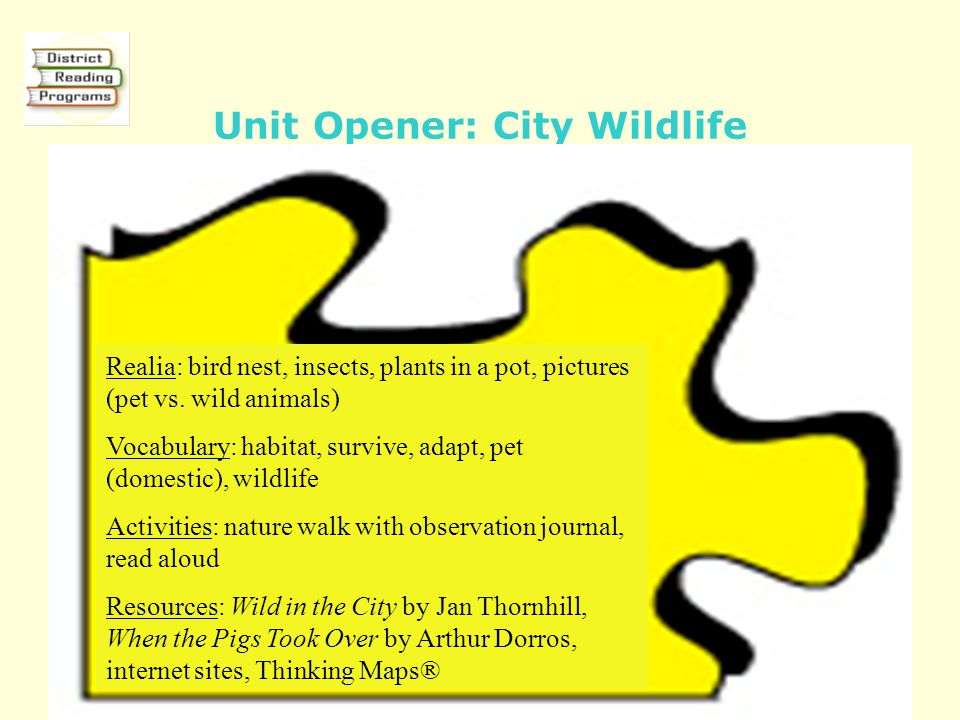 Unit Opener: City Wildlife Realia: bird nest, insects, plants in a pot, pictures (pet vs.