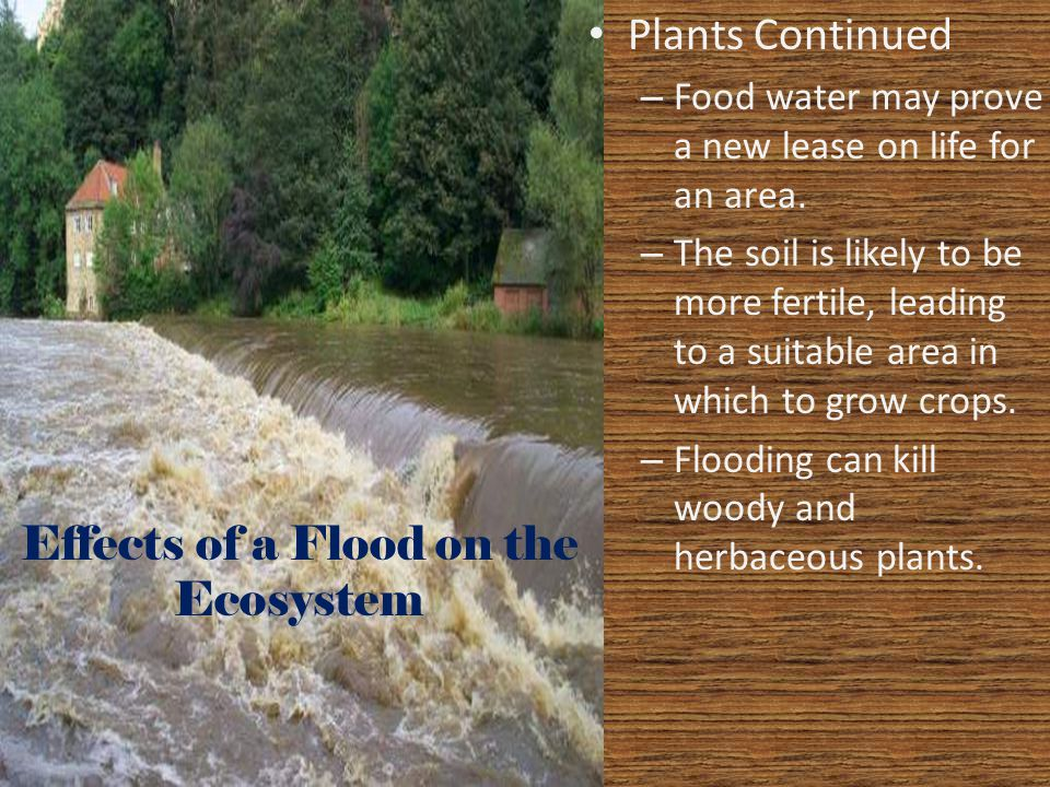 Effects of a Flood on the Ecosystem Plants Continued – Food water may prove a new lease on life for an area. – The soil is likely to be more fertile,