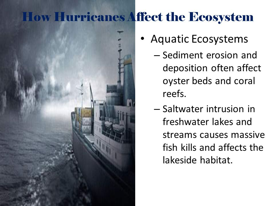 How Hurricanes Affect the Ecosystem Aquatic Ecosystems – Sediment erosion and deposition often affect oyster beds and coral reefs. – Saltwater intrusi