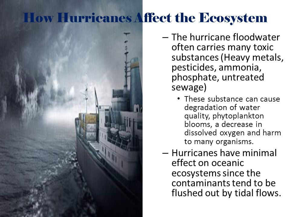 How Hurricanes Affect the Ecosystem – The hurricane floodwater often carries many toxic substances (Heavy metals, pesticides, ammonia, phosphate, untr
